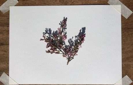 flowers botanical art