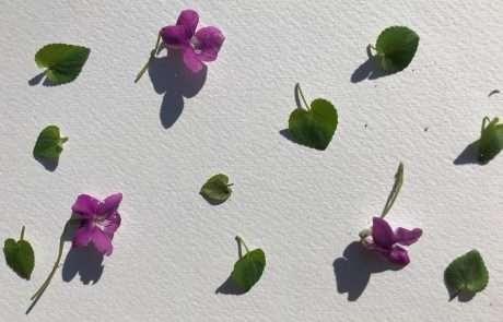 bashed botanical art composition