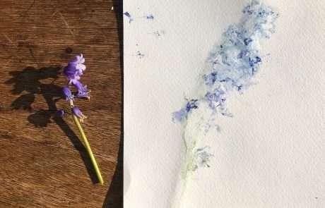 botanical art bluebells